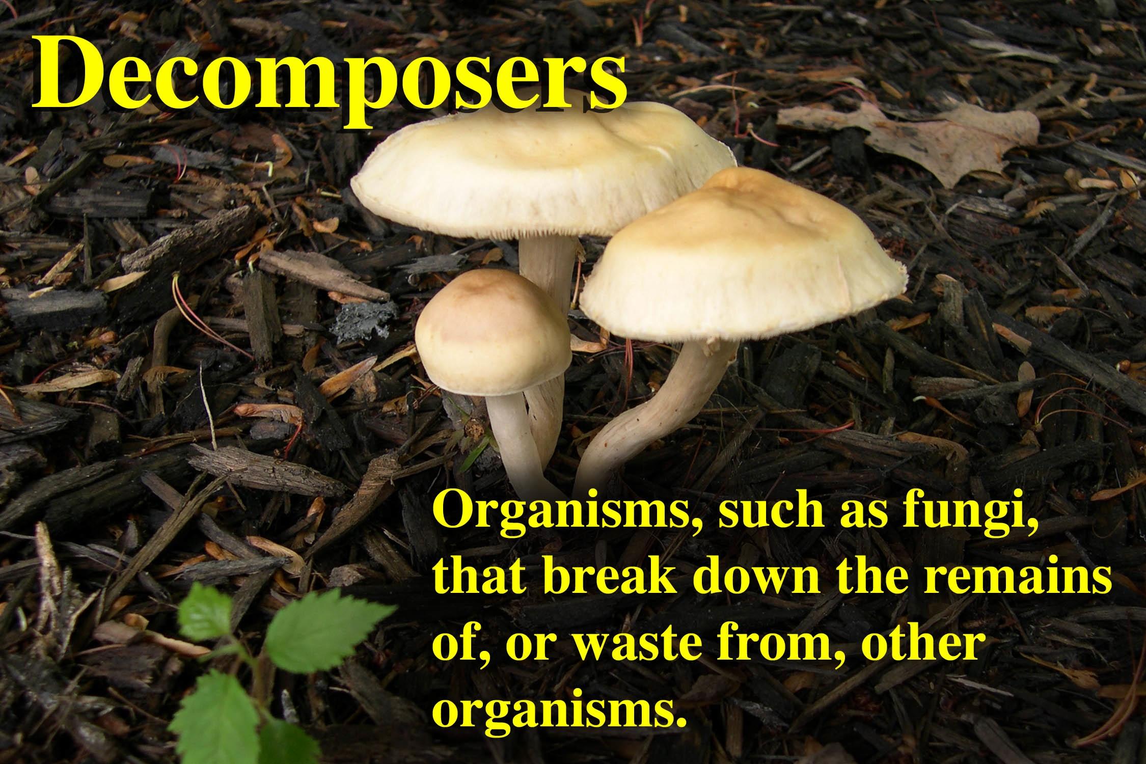 Decomposers for Definition de